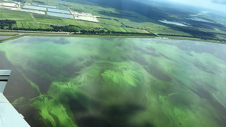 cyanobacteria crisis governor scott issues state of emergency for