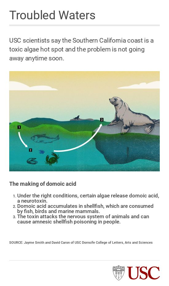 EMBED 3 domoic acid graphic