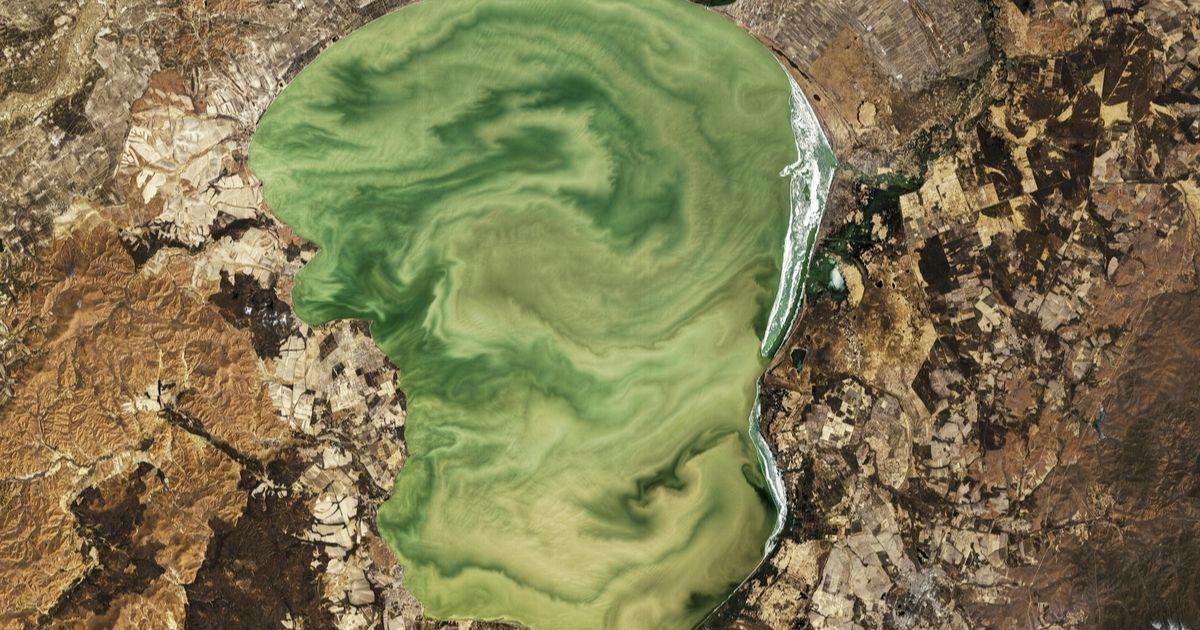 Lakes Worldwide Are Experiencing More Severe Algal Blooms | Science | News