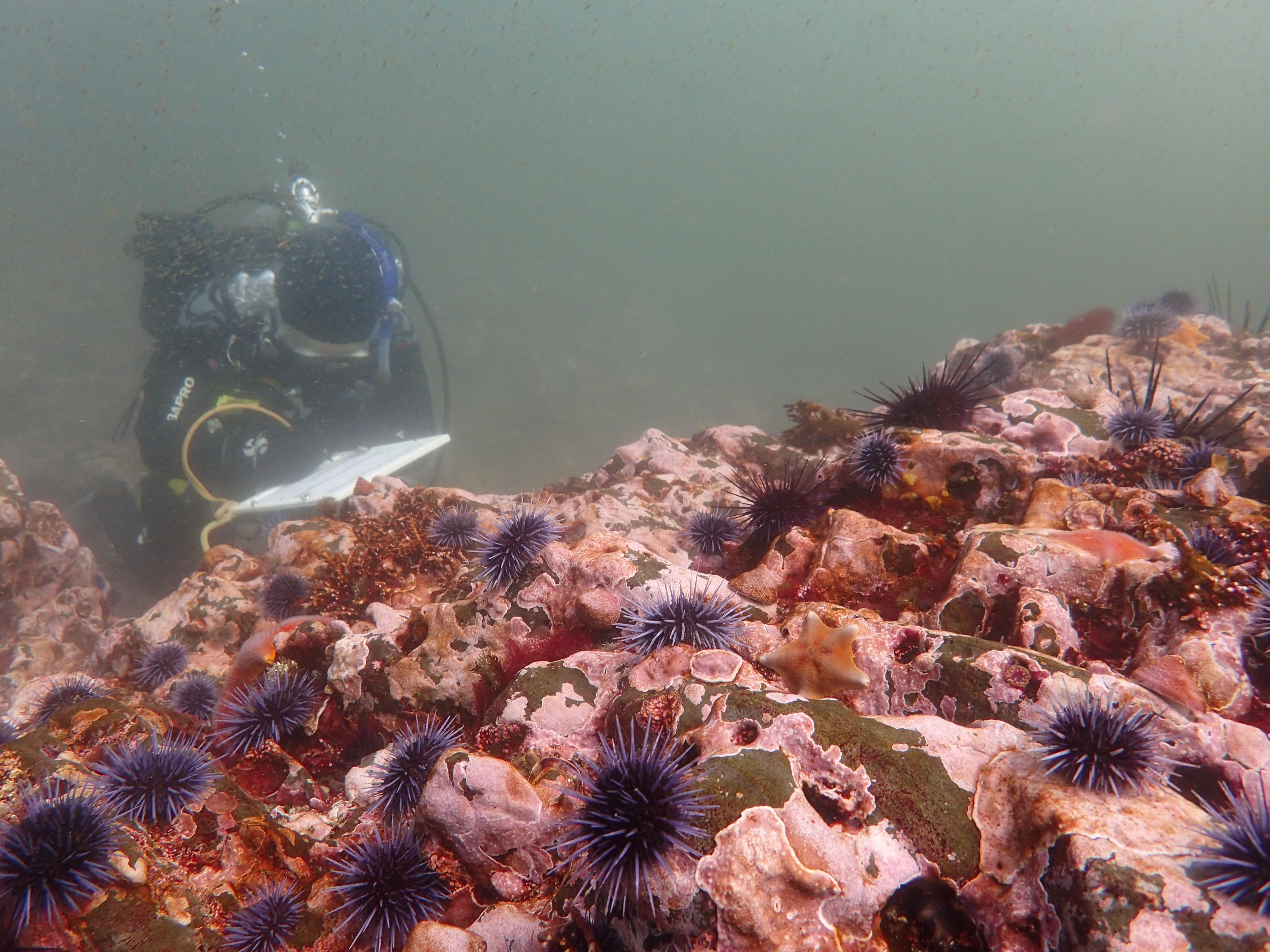 EM4 Dr Cynthia Catton CDFW Urchin Barren and Scientific Diver after