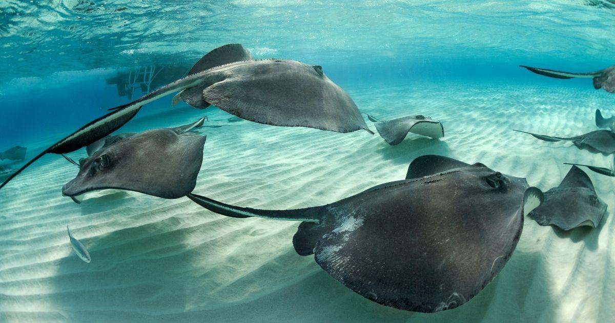 Urgent Action Needed to Protect Sharks and Rays in the Mediterranean