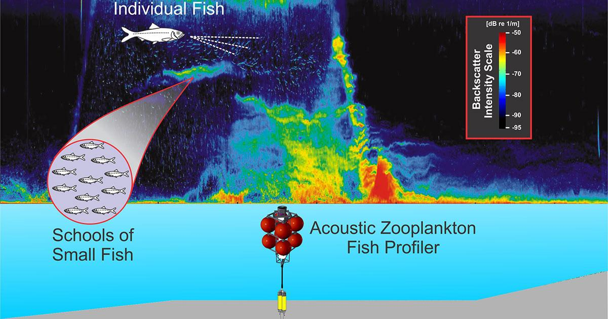 Computer Vision-Based Detection of Fish from Acoustic Backscatter Time Series