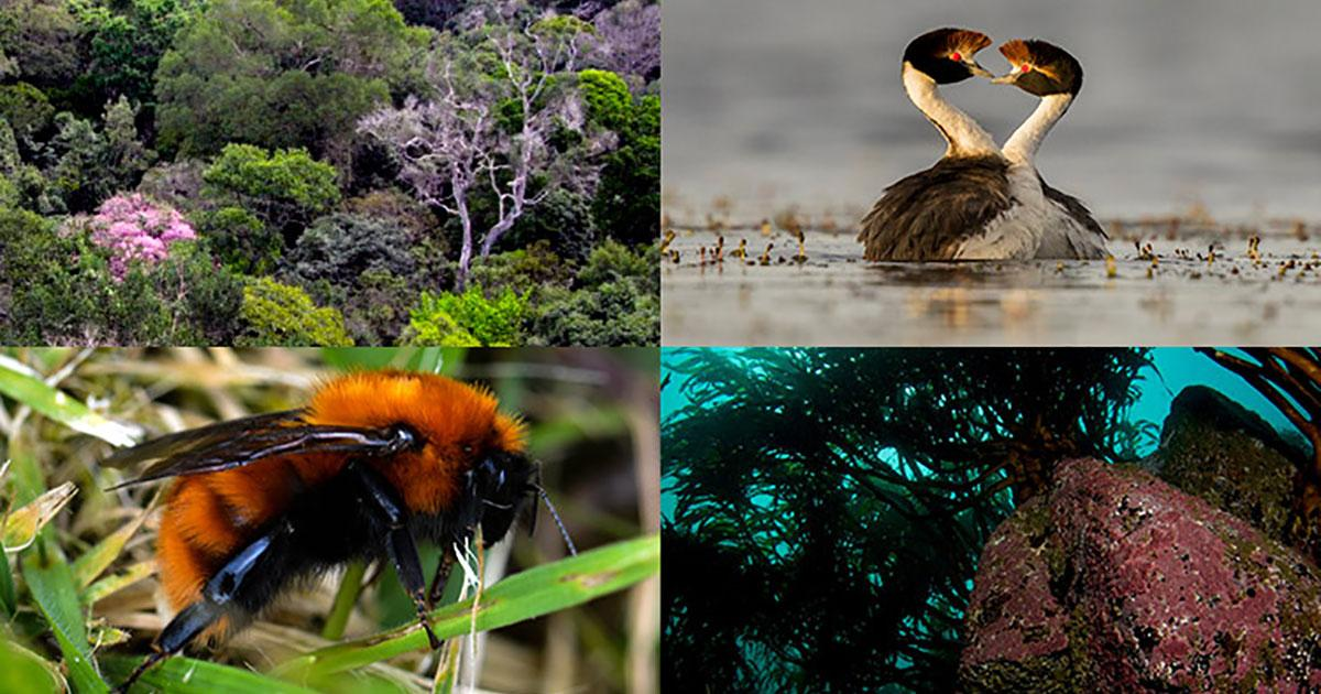 Collaborative Projects to Advance Understanding of Biodiversity in Latin America