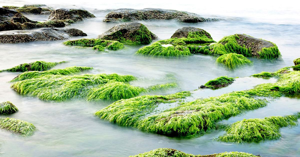 Algae as a Resource: Chemical Tricks from the Sea