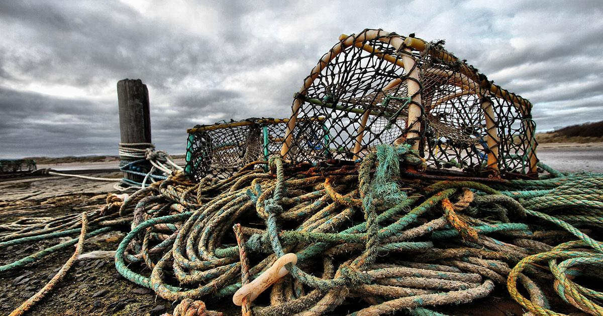 Seafood Innovation Fund Opens for Applications