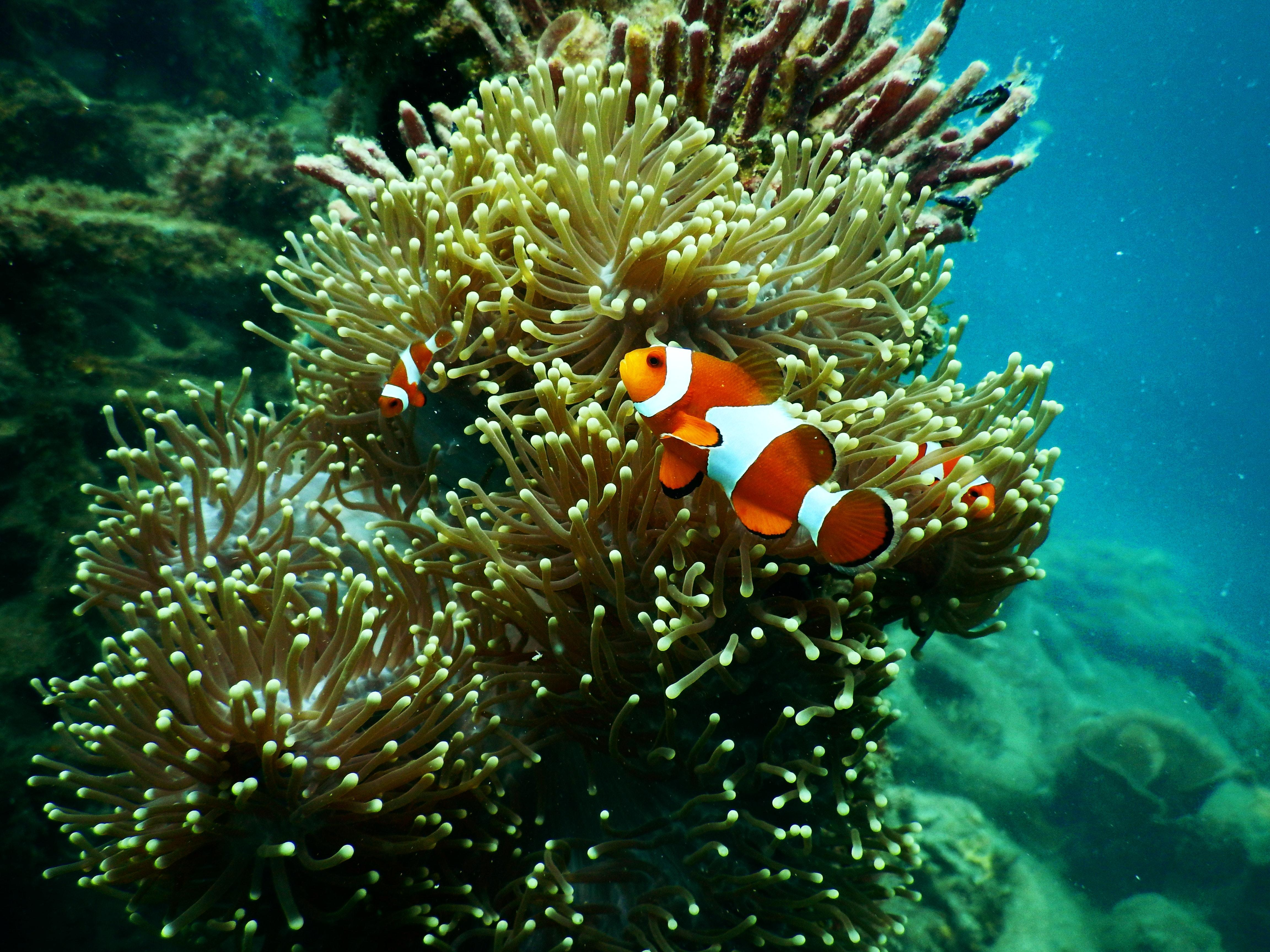 EM2 aquarium aquatic clown fish 1125979 1