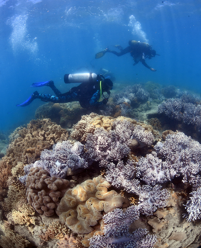 GBRF researchers checking corals for signs of spawning. Must credit Great Barrier Reef Foundation 3