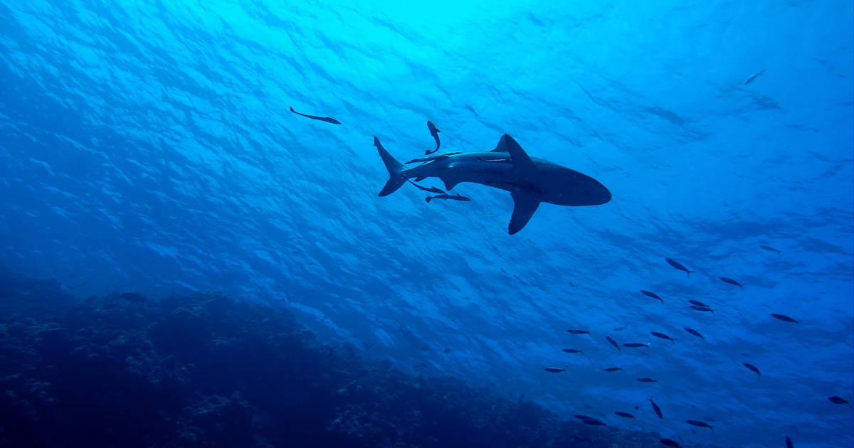 'Hidden Sharks': How We Found a New Way to Detect Them