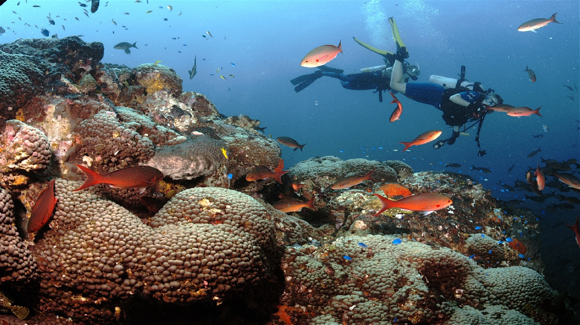 A diver swims among the coral and fish in Flower Garden Banks National Marine Sanctuary